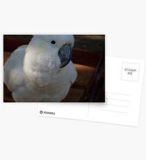Cocky Cocky Postcards