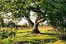My Fairy Tree by Jo Nijenhuis
