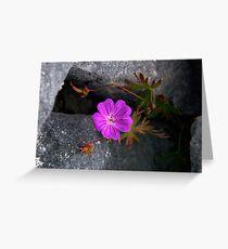 Bloody Cranesbill, Dun Aengus, Inishmore Greeting Card