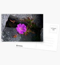 Bloody Cranesbill, Dun Aengus, Inishmore Postcards