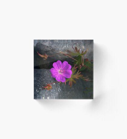 Bloody Cranesbill, Dun Aengus, Inishmore Acrylic Block