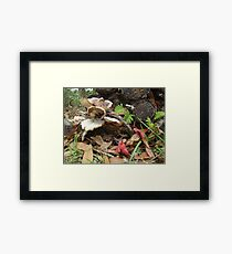 After the rain - life repeats Framed Print