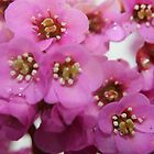 Prettiest in Pink by pcknockoutart