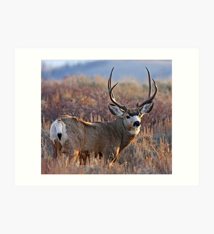 Buck, Afternoon Light in Late Fall Art Print