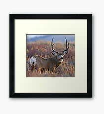 Buck, Afternoon Light in Late Fall Framed Print