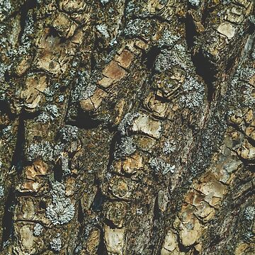 Full frame background of a texture of a tree bark.  by Edalin