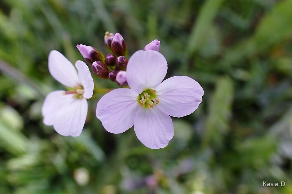 Cuckoo Flowers by Kasia-D