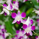Purple Rain by Kasia-D