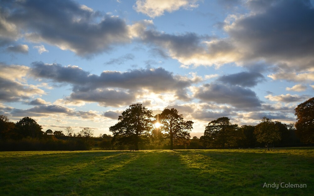 Tree Landscapes in the Weald of West Kent by Andy Coleman