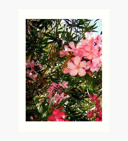 Pink and red oleanders Art Print