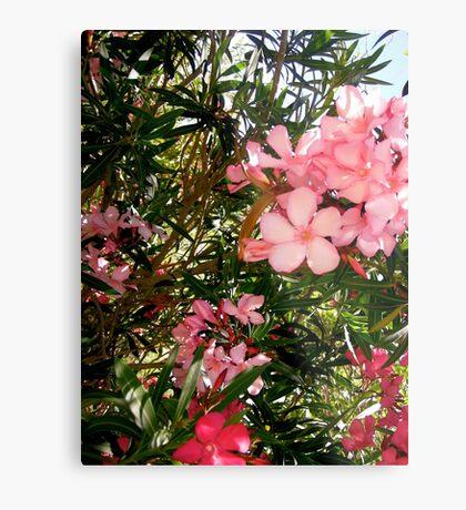 Pink and red oleanders Metal Print