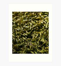 knitted moss Art Print