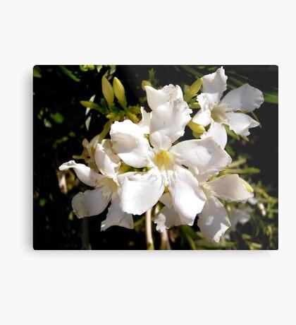 White oleanders Metal Print