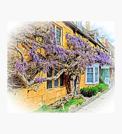 Wisteria Cottage. Photographic Print