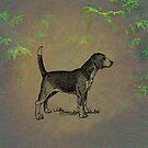 Beagle by David Dehner