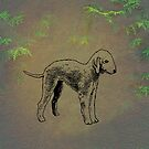 Bedlington Terrier by David Dehner