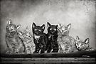 Kittens by Renee Dawson