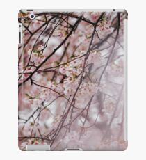 Japanese Cherry Blossom In Bloom  iPad Case/Skin