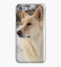 Dude Dog iPhone Case/Skin