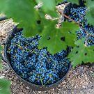 Blue and Green Vineyard Scene by Angela Lisman-Photography