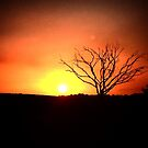alone tree against the sky by Angela Lisman-Photography