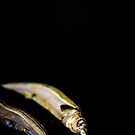 Somethings a little fishy by Angela Lisman-Photography