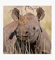 Black Rhino at Lewa Photographic Print