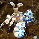 Harlequin Shrimp by MattTworkowski