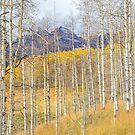 Aspen Ambience by Eric Glaser