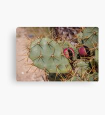 Opuntia prickly pear cactus with thorns and fruits, prickly close up Canvas Print