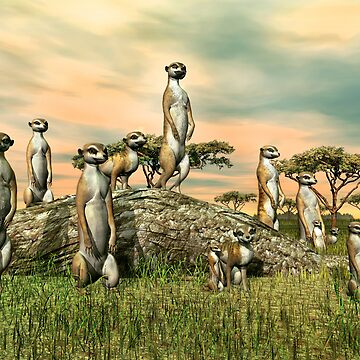 Meerkats by Skyviper