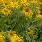 Sunflowers - Watercolour by Glen Allen