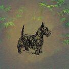 Scottish Terrier by David Dehner