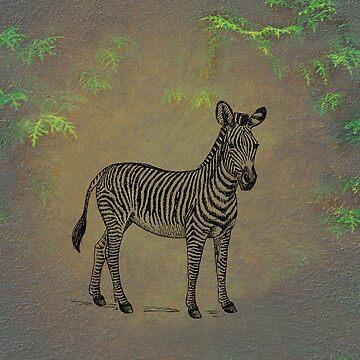 Zebra by netdweller