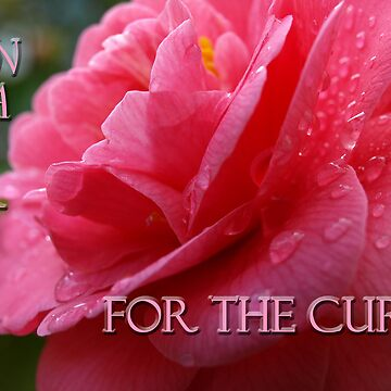 Pink Cure by kimbarose
