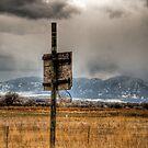 Hoop Dreams by Kasey Cline