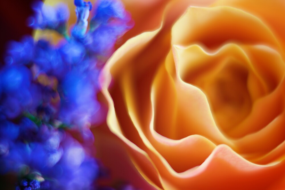 Electric Fleur by Christopher Bookholt