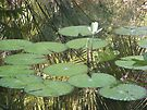 Lily Pads by ValeriesGallery