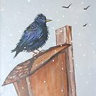 The Starling by sally seabright