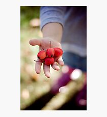 picking crabapples Photographic Print