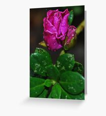 Azalia Bud Greeting Card