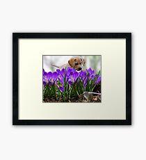 Animal spring feelings Framed Print