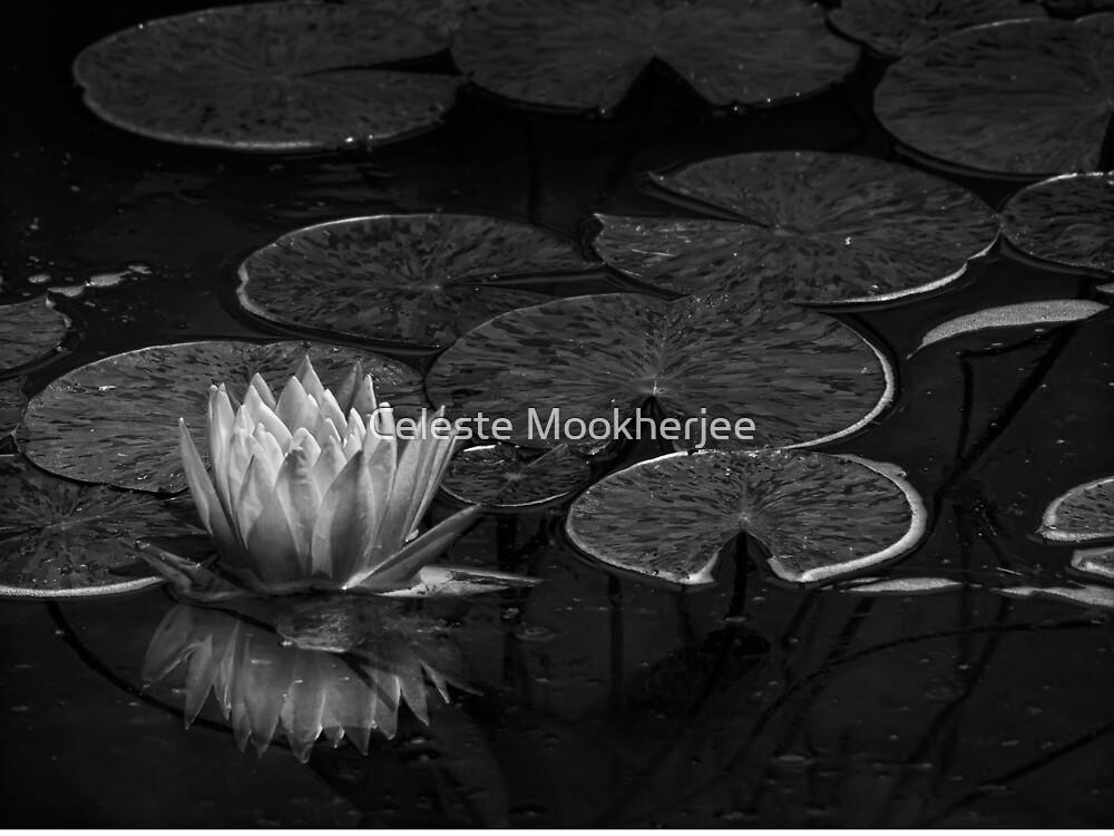 Nymphaea in black & white by Celeste Mookherjee