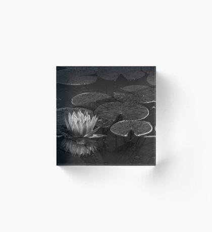 Nymphaea in Schwarz-Weiß Acrylblock