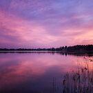 Dawn flight by LadyFi