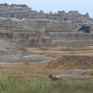 Bighorn by metrognome