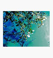 Spring Synthesis IIV Photographic Print