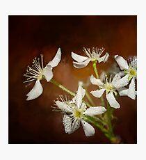 Spring bloom -3 Photographic Print