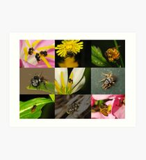 A Bee Collection 2009 Art Print