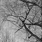 black and white trees by Barry W  King
